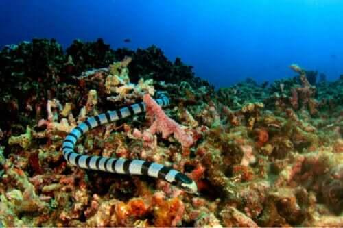 Klassificering av havsormar
