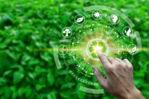 Vad innebär ett ekosystems produktivitet?
