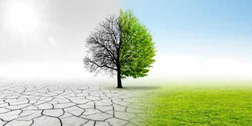 Ett träd där halva är levande och andra halvan dött.