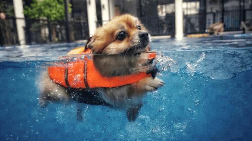 Fem tips att tänka på om du vill simma med din hund