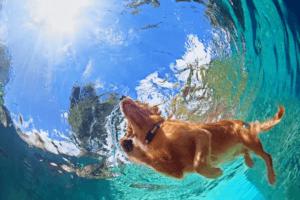 simma med din hund i pool