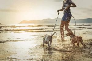 simma med din hund: två hundar rastas på stranden