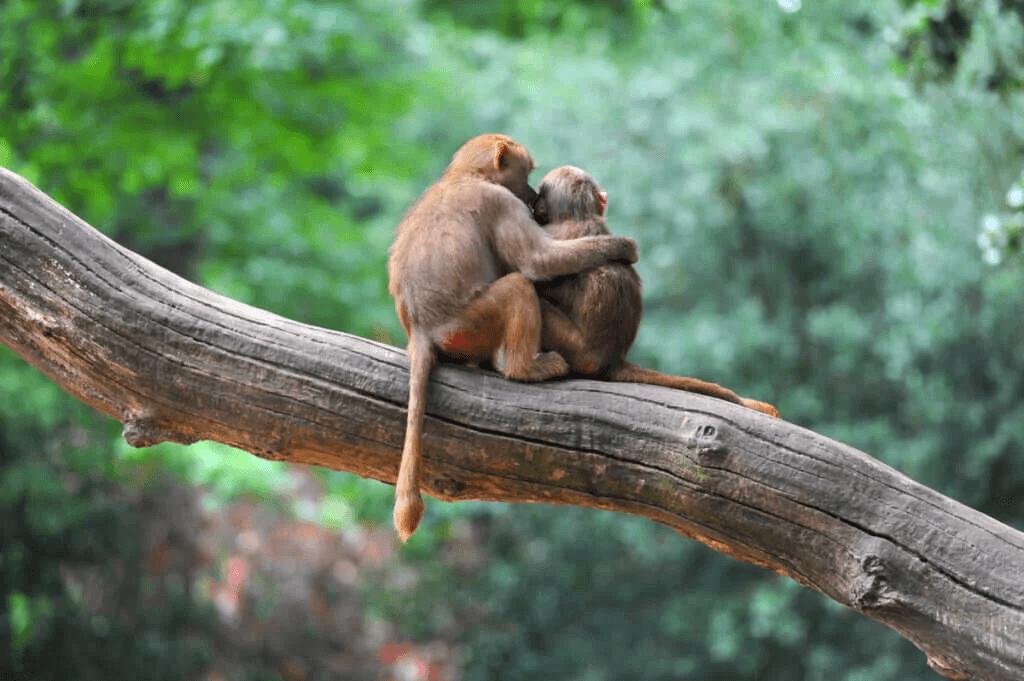 Har djur ett medvetande?