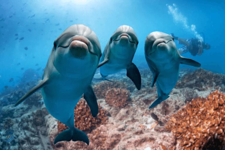 Är det sant att delfiner känner empati?
