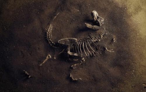 Vad är paleoekologi?