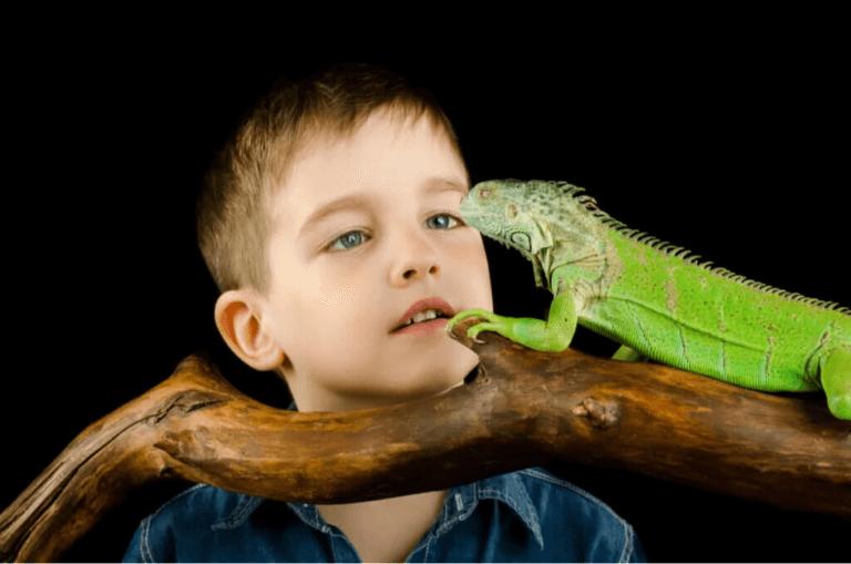 Exotiska reptiler och amfibier kan orsaka salmonellos