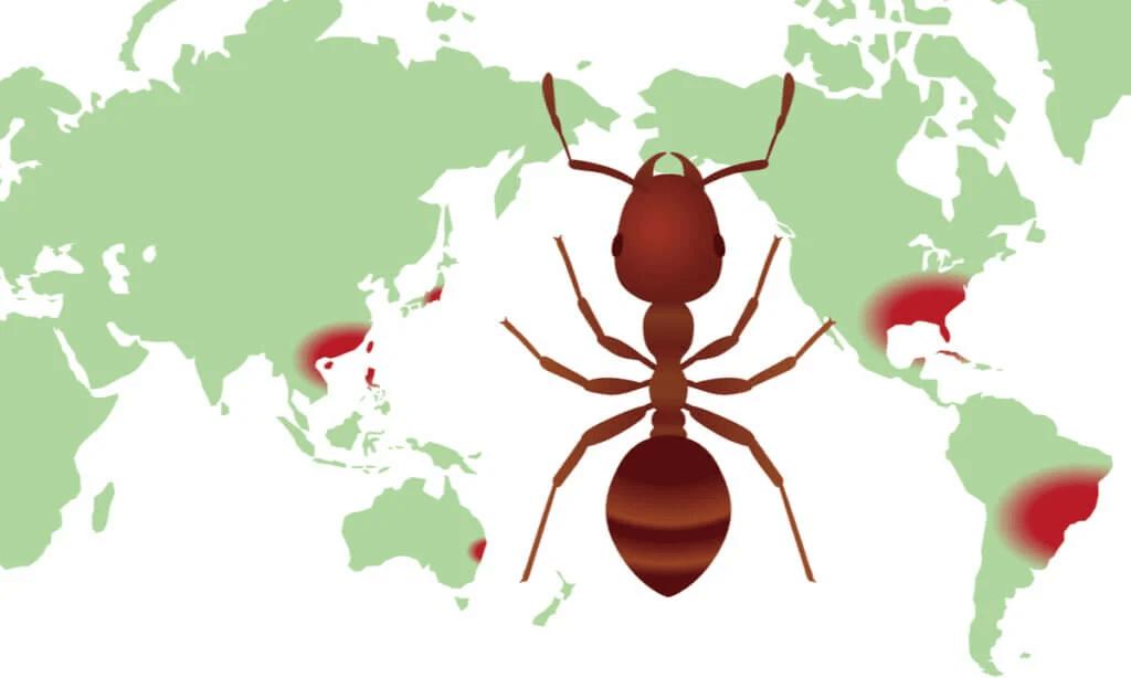 Vad är distributionskartor för biologisk mångfald?