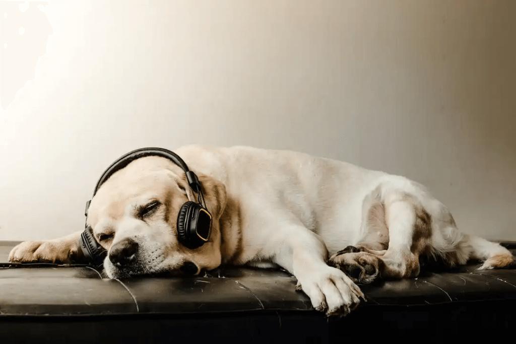Kan musik få hundar att slappna av?