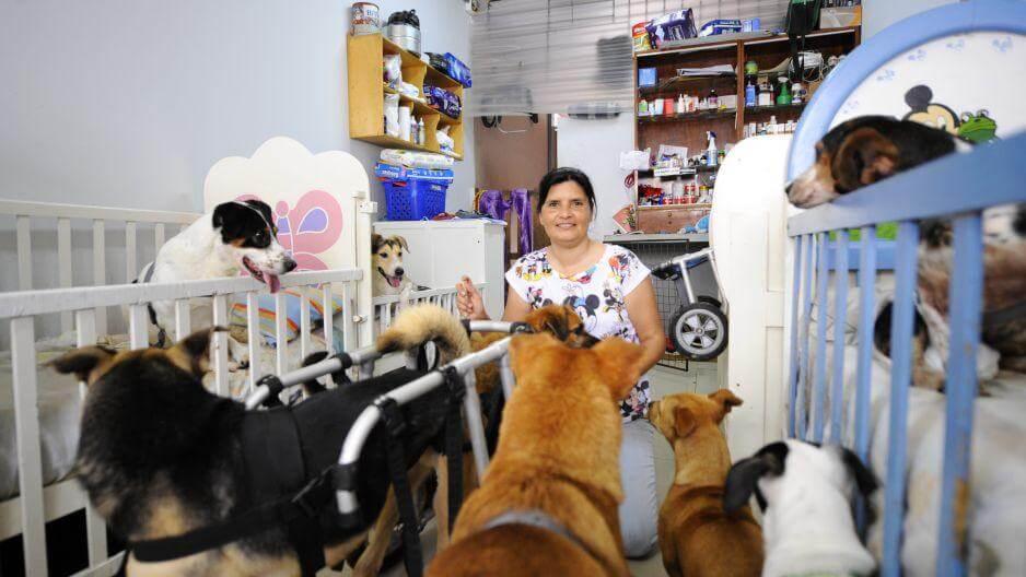 Handikappade hundar: En kvinna hjälper dem med spjälsängar, rullstolar och blöjor