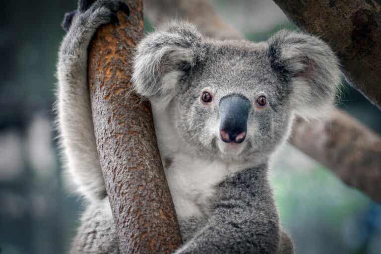 De 12 djuren som påverkas mest av klimatförändringarna