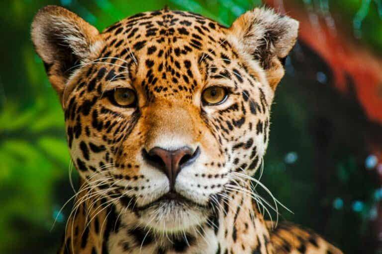 De 15 farligaste djuren i Amazonas