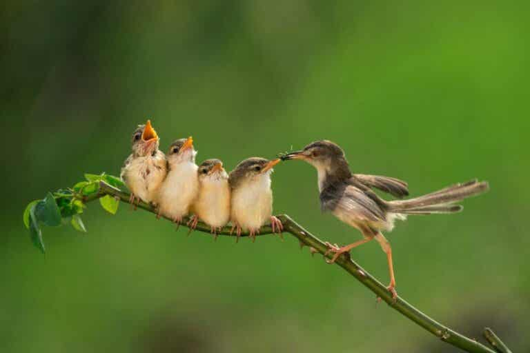 Utfodring av fågelungar: Allt du behöver veta