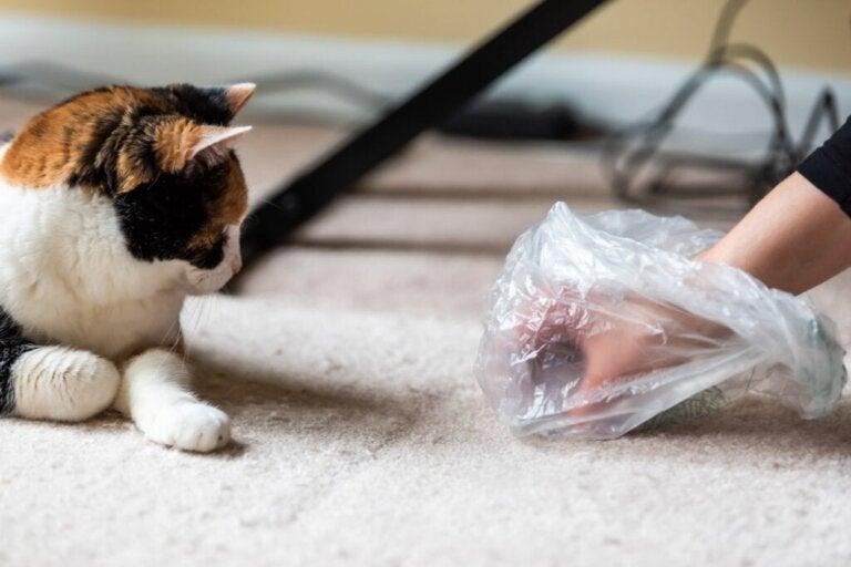 Vad gör jag om min katt slutar använda kattlådan?