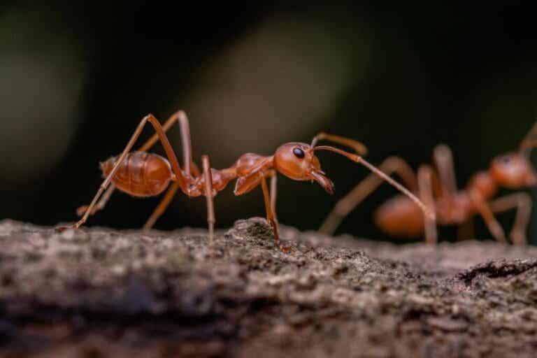 Sover myror?