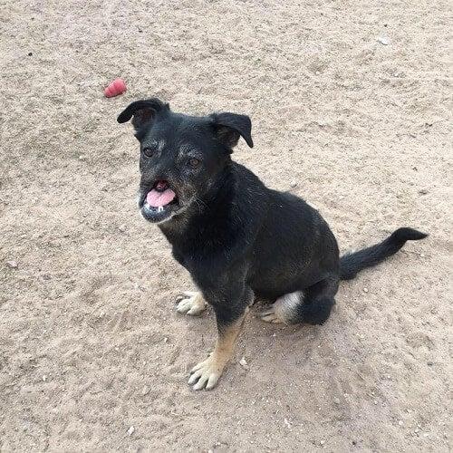 Meet Anubis, Dog Who traveled 11,000 Km to a Home