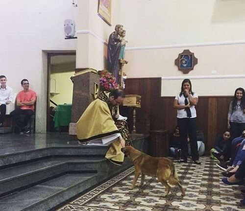 A Lesson on Animal Treatment: Stray Dog in a Church