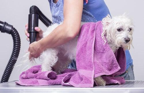 반려동물 보살핌의 기본: 반려견을 목욕시키는 팁