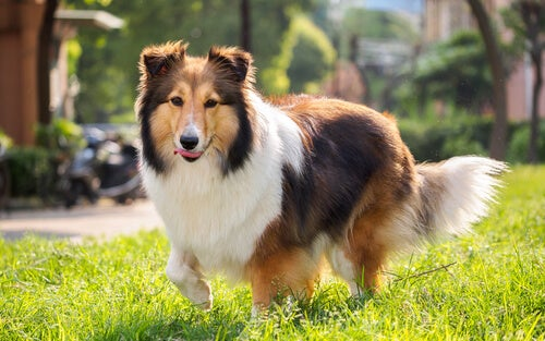 The 7 Most Independent Dog Breeds