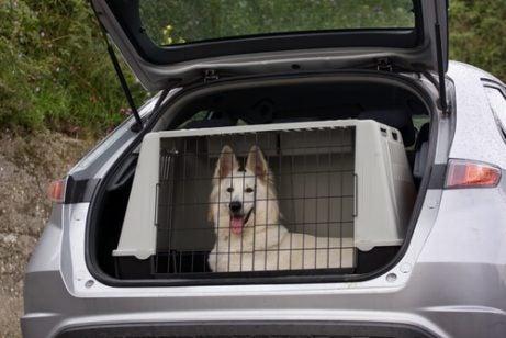 Hund i bur i bagasjerommet