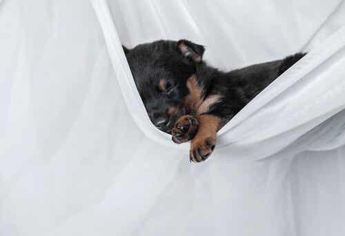 Why Do Dogs Sleep All Day Long?