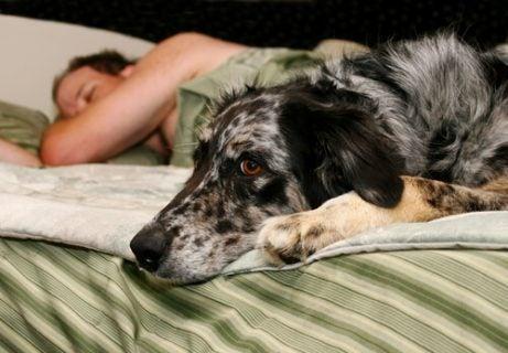 kjæledyret elsker å sove med deg