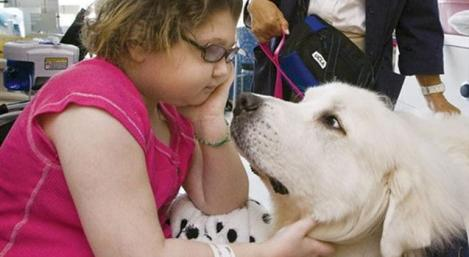 A little girl in a hospital with therapy dogs.
