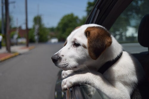 10 pieces of advice to keep your dog from being stolen