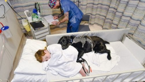 A boy in the hospital with a therapy dog.