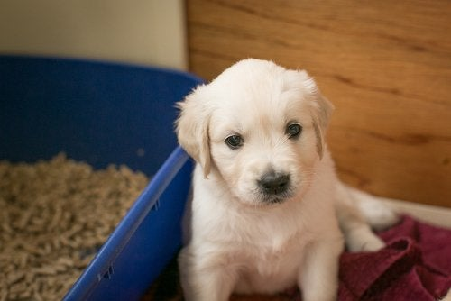 puppy and litter box