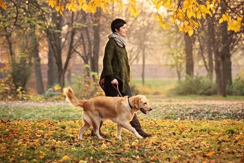 A woman walking her gold retriever through the fall leaves.