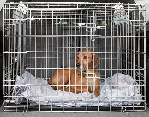 A dog in a cage.