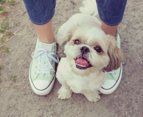 Why Do Dogs Love To Sit On Our Feet?