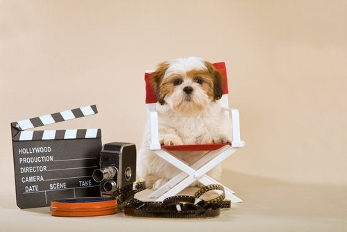 Dogs watch TV: a doggy director of a movie.