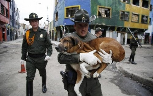 police saving dog