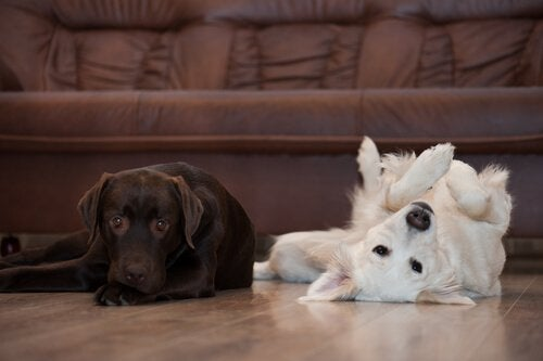 Our adorable furry friends