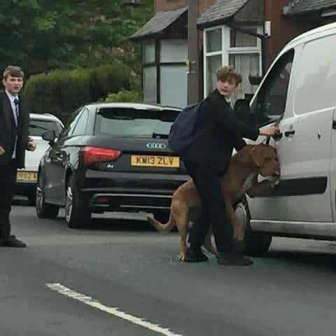 Bradley, the young man who saved a dog from being hanged by his own leash