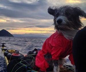 Nirvana the sea dog on a journey