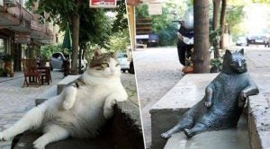 Tombili, the famous cat with a statue in Istanbul, next to her statue