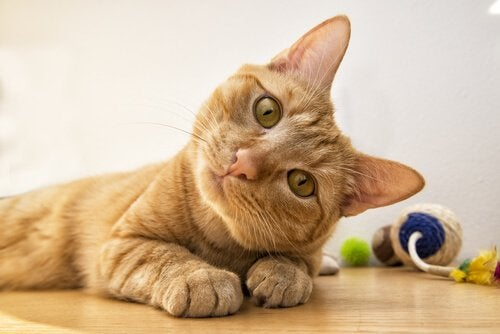 6 Cat Facial Expressions and What They Mean