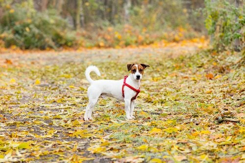 Dog Theft from Parks Increases Across Spain