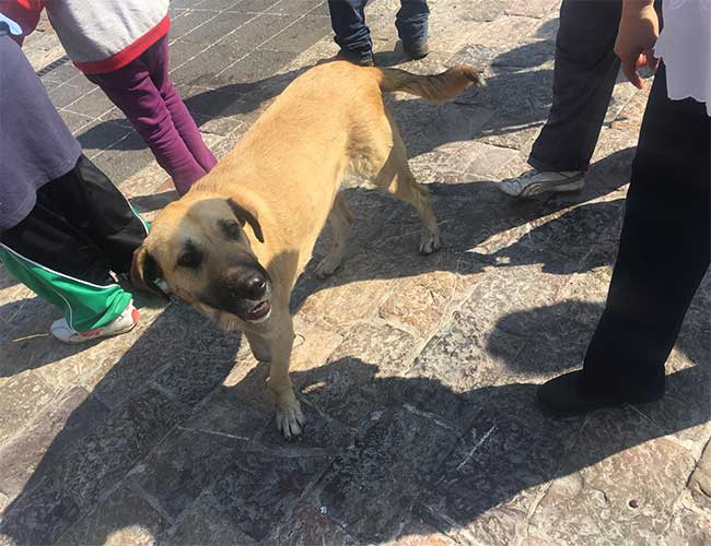 A dog abandoned at the Basilica of Guadalupe.