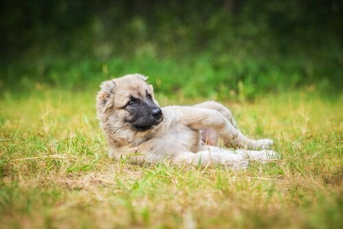 Why dogs love to roll around in the dirt and mud