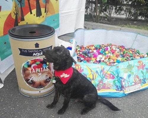 Recycling to help animals!