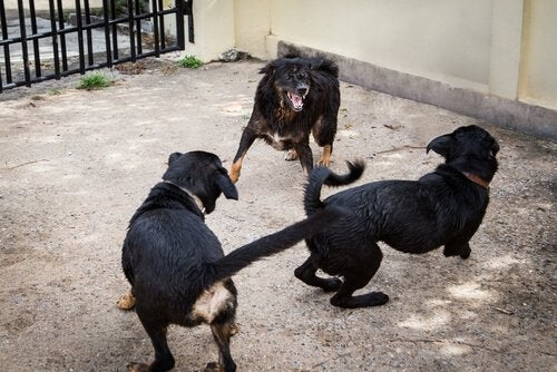 Spanish Police Rescue 230 Dogs from Dog Fight Ring