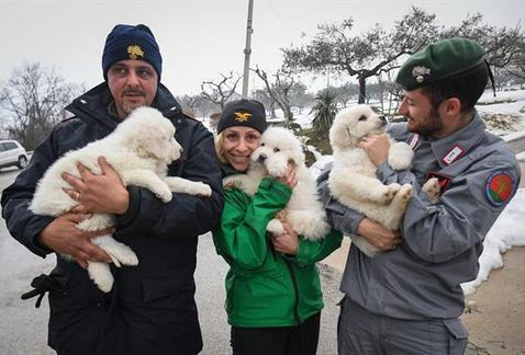 Three Puppies have Survived after a Hotel was Buried in Italy