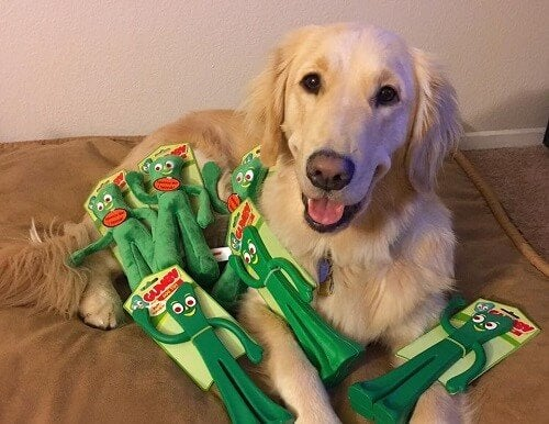 Dog Reacts to Owner Dressed as His Favorite Toy: Gumby