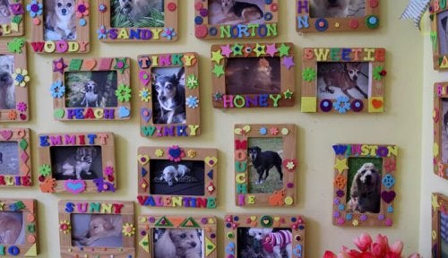 Pictures of elderly dogs framed on the wall