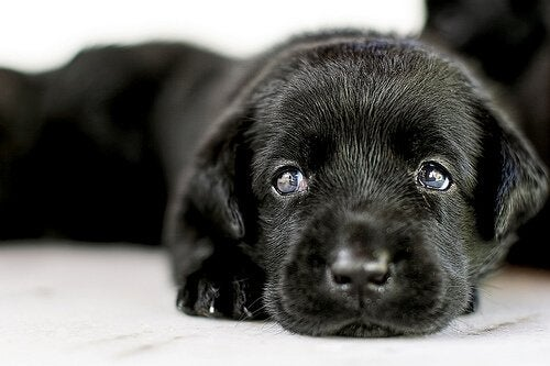 Everything You Should Know About Adopting a Dog
