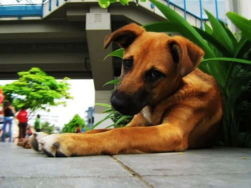 How to Stop Your Dog from Eating Plants