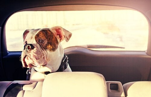 How to Prevent your Dog from Getting Carsick